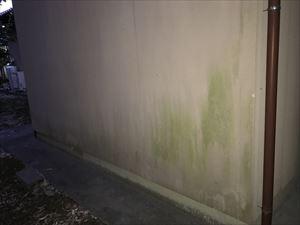藻が付いた住宅外壁